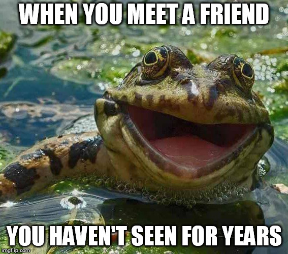 WHEN YOU MEET A FRIEND YOU HAVEN'T SEEN FOR YEARS | image tagged in frog,happy,friendship | made w/ Imgflip meme maker
