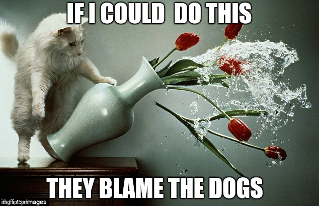 Cats can blame on dogs   | IF I COULD  DO THIS THEY BLAME THE DOGS | image tagged in naughty cat,dogs,cats | made w/ Imgflip meme maker