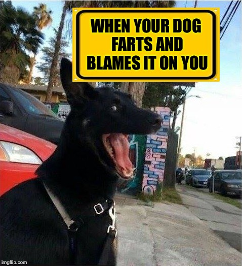 What comes around, goes around... | WHEN YOUR DOG FARTS AND BLAMES IT ON YOU | image tagged in dog,fart,blame | made w/ Imgflip meme maker