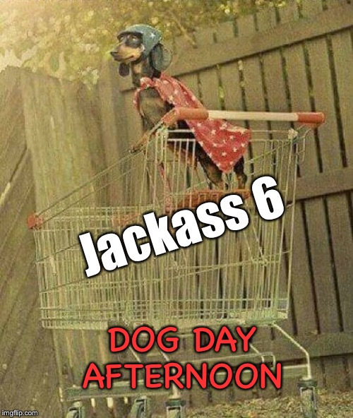 The stupidity continues | Jackass 6 DOG DAY AFTERNOON | image tagged in jackass,movies,daredevil,dog,funny dogs,funny memes | made w/ Imgflip meme maker