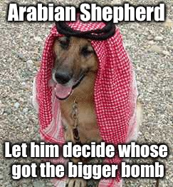 Arabian Shepherd Let him decide whose got the bigger bomb | made w/ Imgflip meme maker