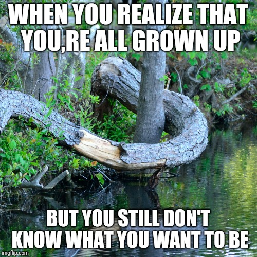 WHEN YOU REALIZE THAT YOU,RE ALL GROWN UP BUT YOU STILL DON'T KNOW WHAT YOU WANT TO BE | image tagged in indecisive tree | made w/ Imgflip meme maker