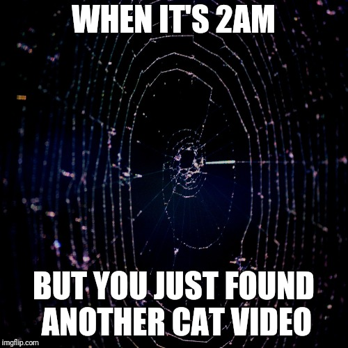 WHEN IT'S 2AM BUT YOU JUST FOUND ANOTHER CAT VIDEO | image tagged in caught in the web | made w/ Imgflip meme maker