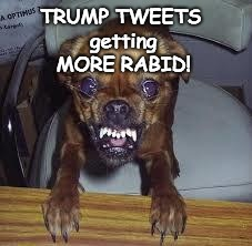 TRUMP TWEETS - RABID | TRUMP TWEETS getting MORE RABID! | image tagged in rabid,crazy tweets,trump,trump tweeting,tweet,rabidtrump | made w/ Imgflip meme maker