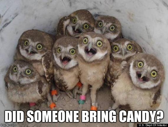 Exited Owls | DID SOMEONE BRING CANDY? | image tagged in amazed owls,exired,joke meme | made w/ Imgflip meme maker
