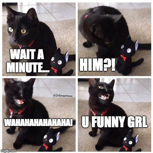 Meeting my Ex's new Cat | WAIT A MINUTE... HIM?! WAHAHAHAHAHAHA! U FUNNY GRL | image tagged in memes,funny,cat,lmao,ex,girl | made w/ Imgflip meme maker