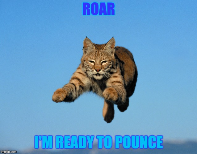 Bobcat | ROAR I'M READY TO POUNCE | image tagged in bobcat,animals,insanity wolf | made w/ Imgflip meme maker