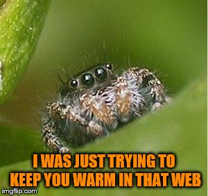 I WAS JUST TRYING TO KEEP YOU WARM IN THAT WEB | made w/ Imgflip meme maker