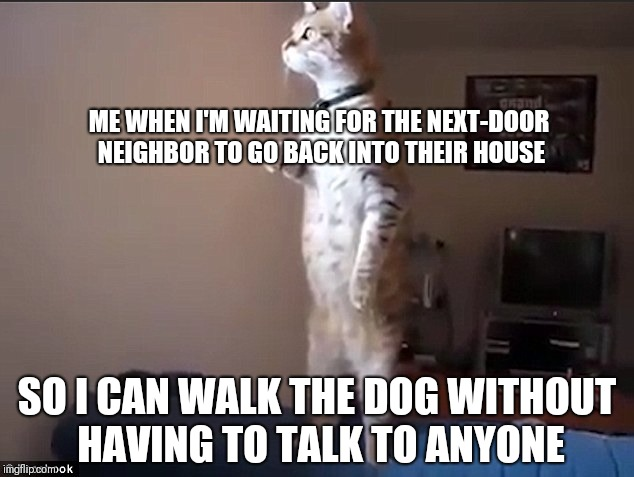 Nosy Neighbor Cat | ME WHEN I'M WAITING FOR THE NEXT-DOOR NEIGHBOR TO GO BACK INTO THEIR HOUSE SO I CAN WALK THE DOG WITHOUT HAVING TO TALK TO ANYONE | image tagged in nosy neighbor cat,cat looking out window,nosy neighbor,what's going on | made w/ Imgflip meme maker