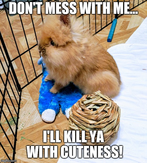 Kill ya with cuteness | DON'T MESS WITH ME... I'LL KILL YA WITH CUTENESS! | image tagged in cute bunny | made w/ Imgflip meme maker
