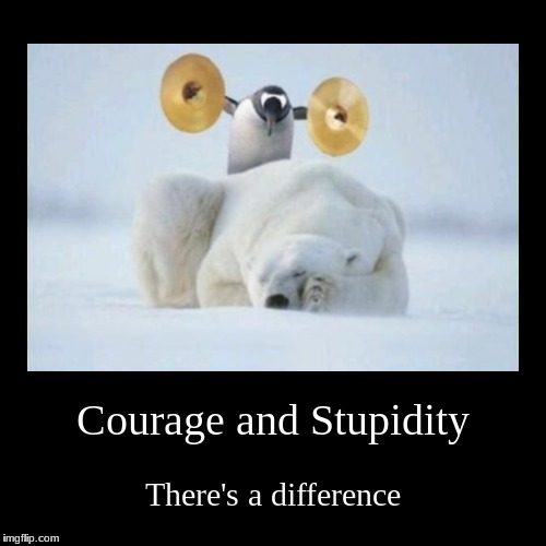 Every time I see that image, this is what I think. | Courage and Stupidity | There's a difference | image tagged in funny,demotivationals,penguin,polar bear,courage,stupidity | made w/ Imgflip demotivational maker