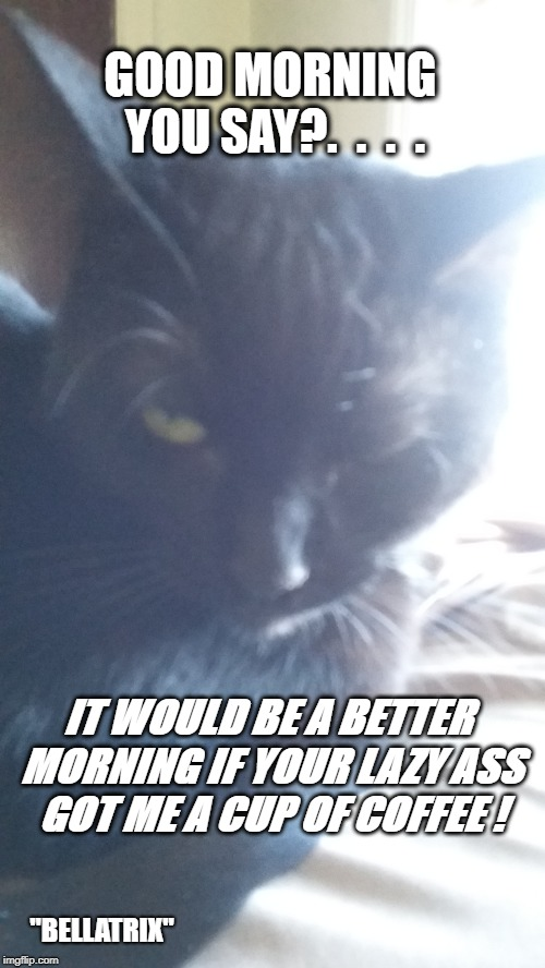 "Good Morning You Say? | GOOD MORNING YOU SAY?.  .  .  . IT WOULD BE A BETTER MORNING IF YOUR LAZY ASS GOT ME A CUP OF COFFEE ! ""BELLATRIX"" 