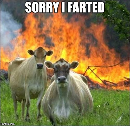 Evil Cows Meme | SORRY I FARTED | image tagged in memes,evil cows | made w/ Imgflip meme maker
