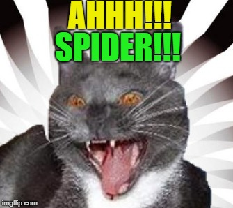 AHHH!!! SPIDER!!! | made w/ Imgflip meme maker