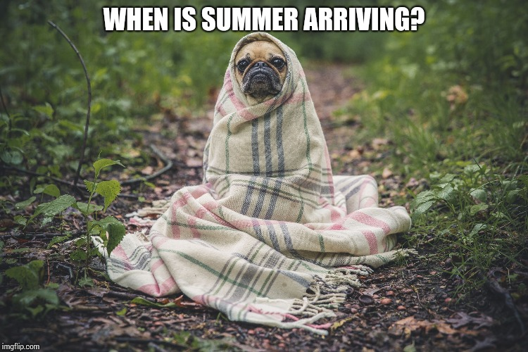When is summer arriving? | WHEN IS SUMMER ARRIVING? | image tagged in weather,dogs | made w/ Imgflip meme maker