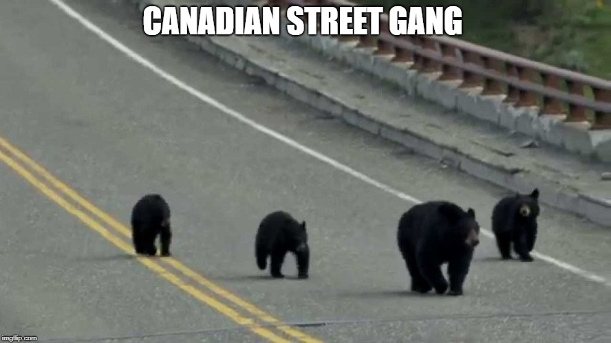 CANADIAN STREET GANG | image tagged in funny,bears,from canada | made w/ Imgflip meme maker