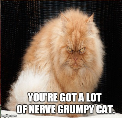 YOU'RE GOT A LOT OF NERVE GRUMPY CAT. | made w/ Imgflip meme maker