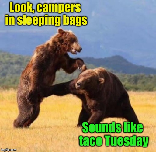People in sleeping bags are soft tacos in bear country | Look, campers in sleeping bags Sounds like taco Tuesday | image tagged in memes,bears,taco,taco tuesday,camper | made w/ Imgflip meme maker