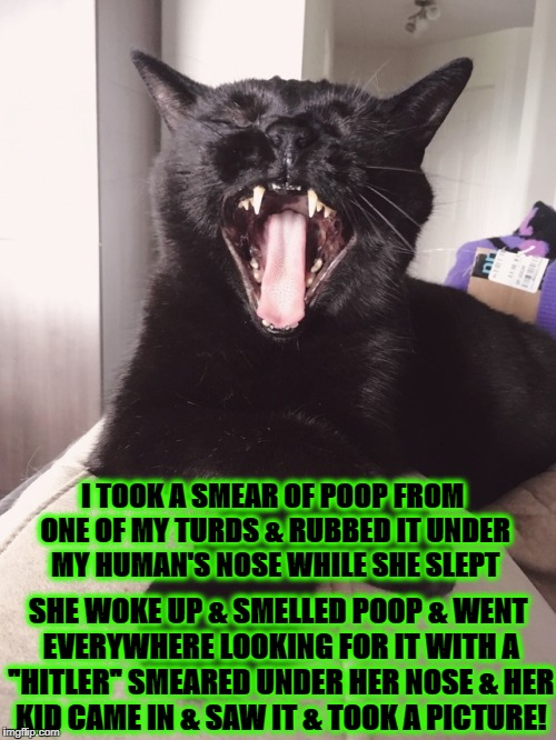 I TOOK A SMEAR OF POOP FROM ONE OF MY TURDS & RUBBED IT UNDER MY HUMAN'S NOSE WHILE SHE SLEPT SHE WOKE UP & SMELLED POOP & WENT EVERYWHERE L | image tagged in pranksta cat | made w/ Imgflip meme maker