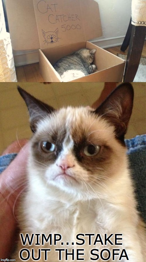 When You Don't Claim Your Own Territory | WIMP...STAKE OUT THE SOFA | image tagged in grumpy cat,sofa | made w/ Imgflip meme maker