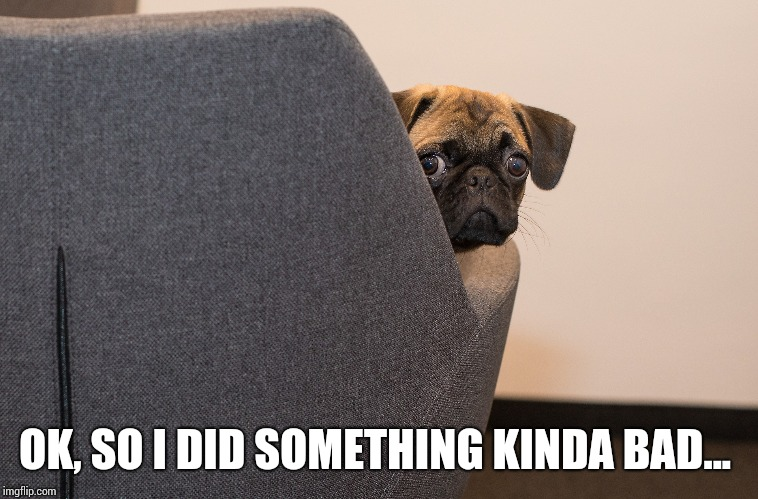 I Did Something Bad | OK, SO I DID SOMETHING KINDA BAD... | image tagged in dogs,funny dog memes | made w/ Imgflip meme maker