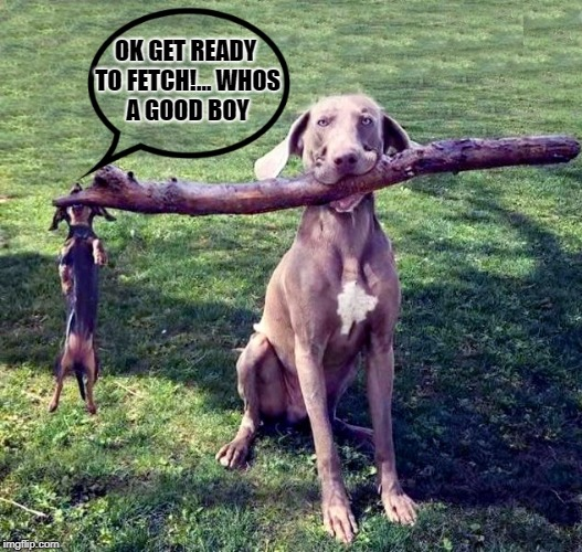 ok get ready to fetch! | OK GET READY TO FETCH!... WHOS A GOOD BOY | image tagged in funny dogs,fetch | made w/ Imgflip meme maker