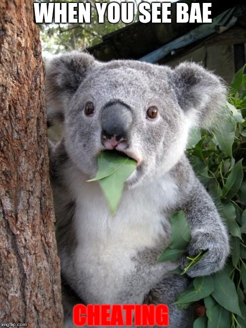 Surprised Koala Meme | WHEN YOU SEE BAE CHEATING | image tagged in memes,surprised koala | made w/ Imgflip meme maker
