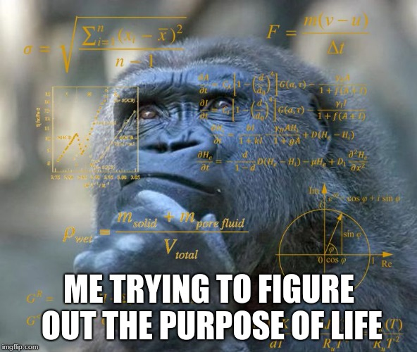 ME TRYING TO FIGURE OUT THE PURPOSE OF LIFE | image tagged in thinking math ape | made w/ Imgflip meme maker