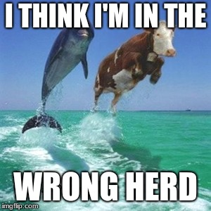 sea cow | I THINK I'M IN THE WRONG HERD | image tagged in cows | made w/ Imgflip meme maker