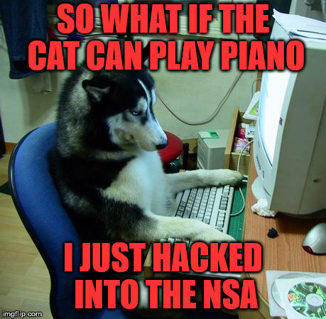 I Have No Idea What I Am Doing Meme | SO WHAT IF THE CAT CAN PLAY PIANO I JUST HACKED INTO THE NSA | image tagged in memes,i have no idea what i am doing | made w/ Imgflip meme maker