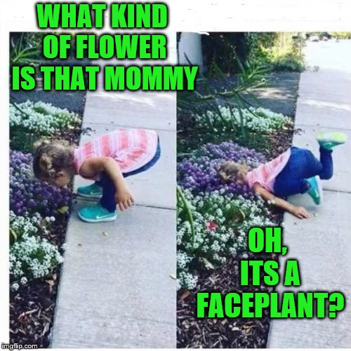 I could be wrong, it could be Audrey 2. | WHAT KIND OF FLOWER IS THAT MOMMY OH, ITS A FACEPLANT? | image tagged in faceplant,audrey 2,feed me | made w/ Imgflip meme maker