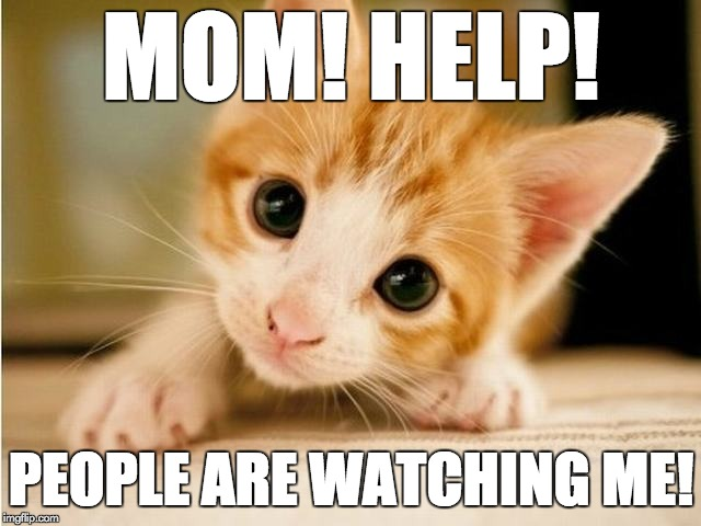 Help me mom! | MOM! HELP! PEOPLE ARE WATCHING ME! | image tagged in help me,kitten | made w/ Imgflip meme maker