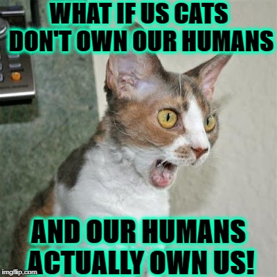 WHAT IF US CATS DON'T OWN OUR HUMANS AND OUR HUMANS ACTUALLY OWN US! | image tagged in conspiracy cat | made w/ Imgflip meme maker