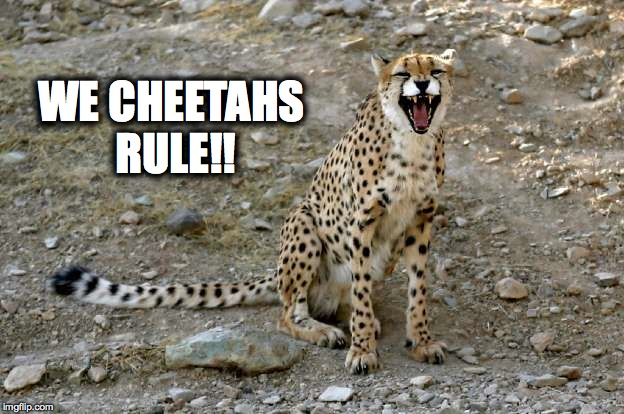 WE CHEETAHS RULE!! | made w/ Imgflip meme maker
