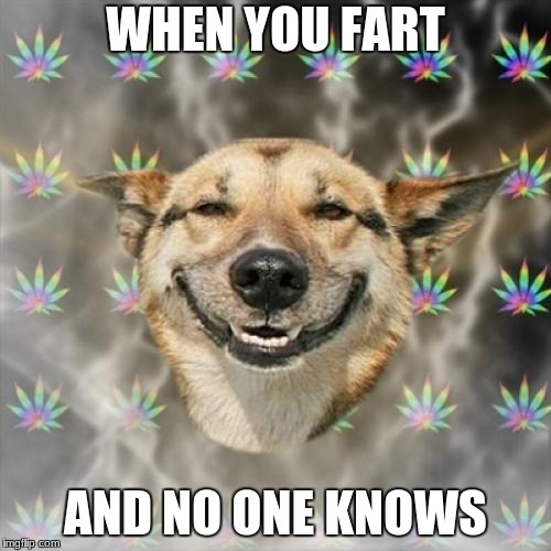 Dog week a landon_the_memer and Nikkobellic event. May 1st to May 8th. | WHEN YOU FART AND NO ONE KNOWS | image tagged in memes,stoner dog,landon_the_memer,nikkobellic,dog week | made w/ Imgflip meme maker