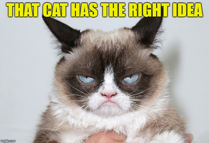 THAT CAT HAS THE RIGHT IDEA | made w/ Imgflip meme maker