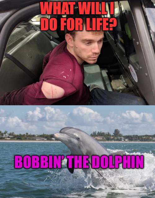 Bobbin' The Dolphin | WHAT WILL I DO FOR LIFE? BOBBIN' THE DOLPHIN | image tagged in dolphin,prison,jail,life,thug life,punk | made w/ Imgflip meme maker