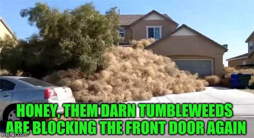 I've had snow days, but this is ridiculous! | HONEY, THEM DARN TUMBLEWEEDS ARE BLOCKING THE FRONT DOOR AGAIN | image tagged in memes,funny,west,tumbleweed,school's out | made w/ Imgflip meme maker