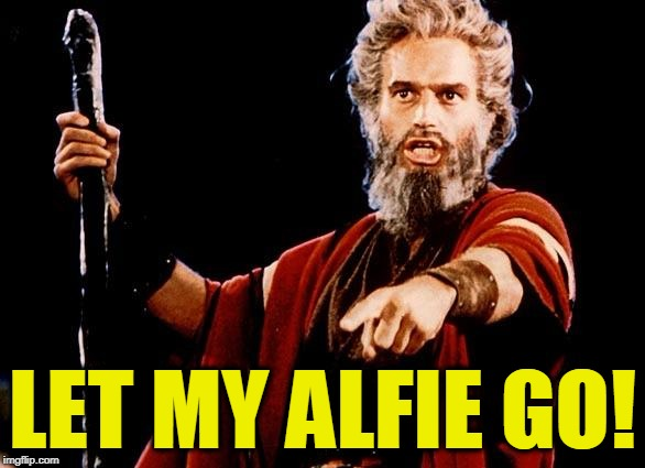 Meanwhile in Italy ... | LET MY ALFIE GO! | image tagged in angry old moses | made w/ Imgflip meme maker