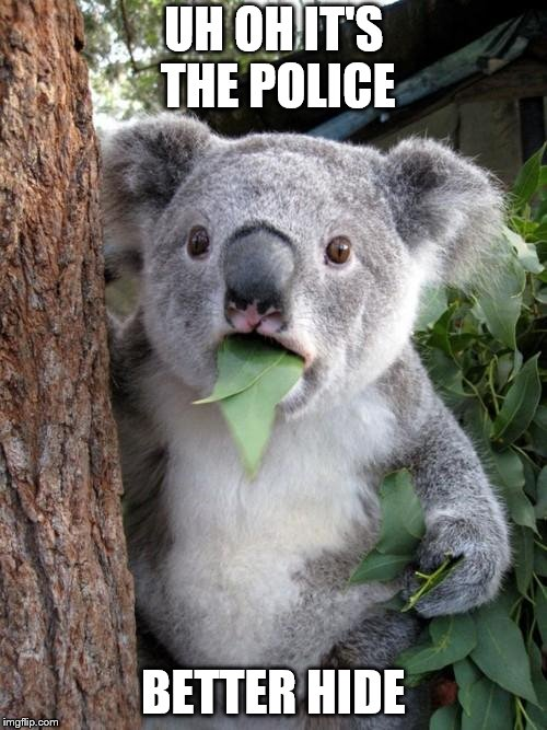 Surprised Koala Meme | UH OH IT'S THE POLICE BETTER HIDE | image tagged in memes,surprised koala | made w/ Imgflip meme maker