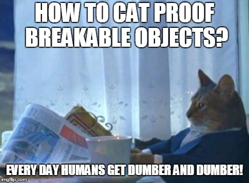 Cat breaking stuff meme | HOW TO CAT PROOF BREAKABLE OBJECTS? EVERY DAY HUMANS GET DUMBER AND DUMBER! | image tagged in memes,i should buy a boat cat,cat pushing objects off of high places,cat,cat meme | made w/ Imgflip meme maker