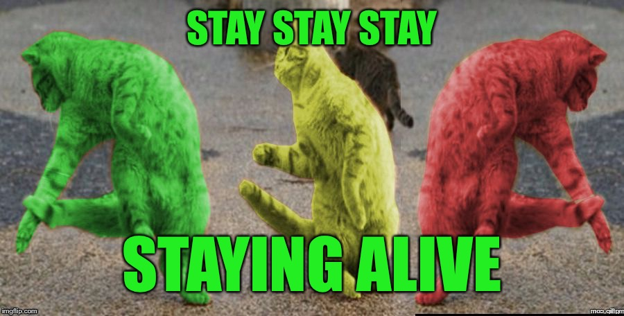 Three Dancing RayCats | STAY STAY STAY STAYING ALIVE | image tagged in three dancing raycats | made w/ Imgflip meme maker