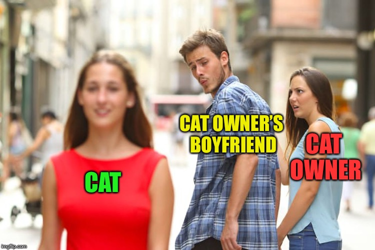 Distracted Boyfriend Meme | CAT CAT OWNER'S BOYFRIEND CAT OWNER | image tagged in memes,distracted boyfriend | made w/ Imgflip meme maker