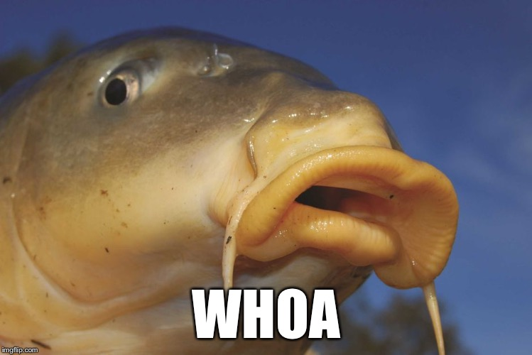 Carp | WHOA | image tagged in carp | made w/ Imgflip meme maker