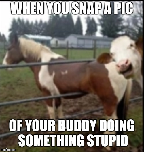 Laughing cow | WHEN YOU SNAP A PIC OF YOUR BUDDY DOING SOMETHING STUPID | image tagged in laughing cow | made w/ Imgflip meme maker