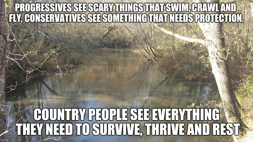 PROGRESSIVES SEE SCARY THINGS THAT SWIM, CRAWL AND FLY, CONSERVATIVES SEE SOMETHING THAT NEEDS PROTECTION. COUNTRY PEOPLE SEE EVERYTHING THE | image tagged in creek | made w/ Imgflip meme maker