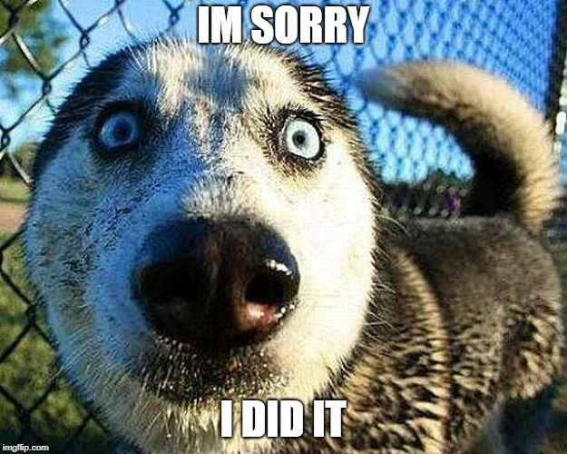IM SORRY I DID IT | image tagged in dogs,sorry | made w/ Imgflip meme maker