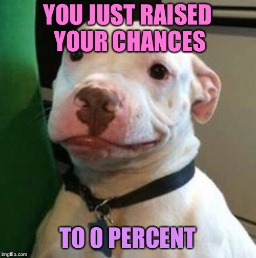 Awkward Dog | YOU JUST RAISED YOUR CHANCES TO 0 PERCENT | image tagged in awkward dog | made w/ Imgflip meme maker