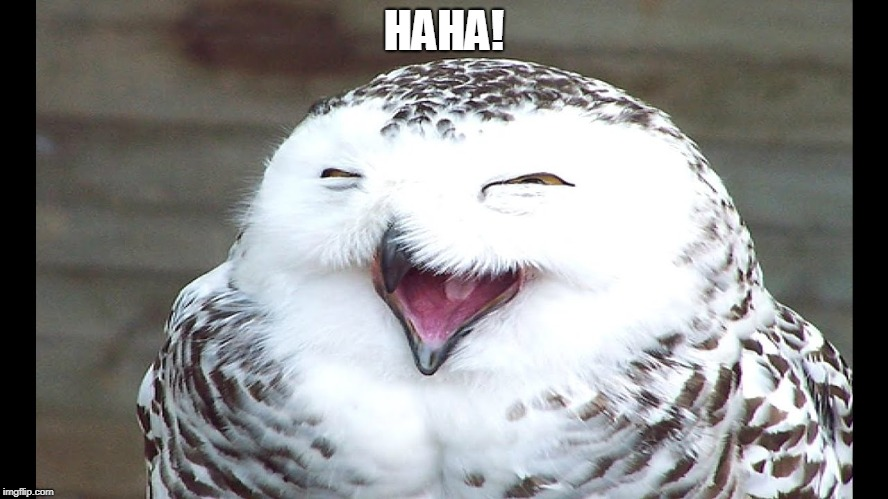 laughing owl | HAHA! | image tagged in laughing owl | made w/ Imgflip meme maker