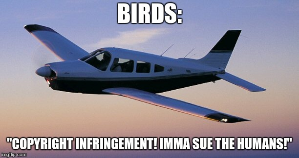 "BIRDS: ""COPYRIGHT INFRINGEMENT! IMMA SUE THE HUMANS!"" 